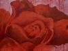 Nr.147  Wildrose  60x80  Leinwand / Acryl