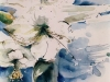 Nr. 78  Weisse Amarilis 38x56   Papier / Aquarell
