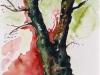 Nr. 24  Baumstudie III  Frühling / Sommer  27x34 Papier / Aquarell